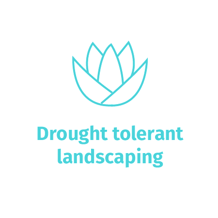 Drought tolerant landscaping